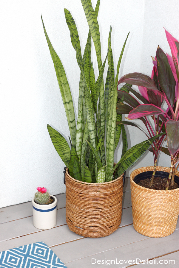 The best house plants to get that are pretty & low matinence, even I won't kill them!